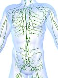 Lymphatic system Royalty Free Stock Photos