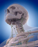 The lymphatic system - the neck Royalty Free Stock Images