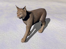 Lynk walking - 3D render Royalty Free Stock Photography