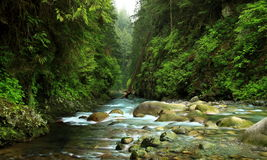 Lynn Canyon Creek Royalty Free Stock Photo