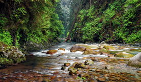 Lynn Canyon Creek. Creek in Lynn Canyon Park North Vancouver Stock Photo