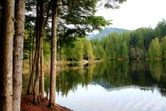 Lynn Canyon Park arkivfoto