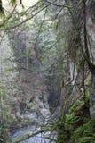 Lynn Canyon Park royaltyfri foto