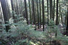 Lynn Canyon Park lizenzfreie stockfotos
