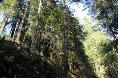 Lynn Canyon Park stockbilder