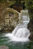 Lynn Canyon Park, Tweelingdalingen, Noord-Vancouver Stock Fotografie