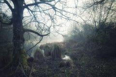 Lynnig dramatisk dimmig skoglandskapvår Autumn Fall royaltyfria bilder