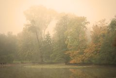 Lynnig höstmorgon i ett Forest Park Fotografering för Bildbyråer