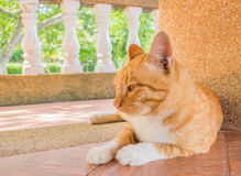 lynnig katt royaltyfria foton