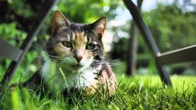 lynnig katt Arkivbilder