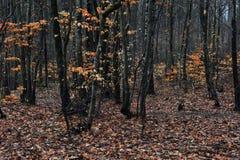 Lynnig och mörk skog Arkivfoton