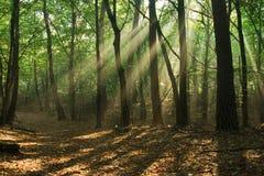 lynnig skog Fotografering för Bildbyråer