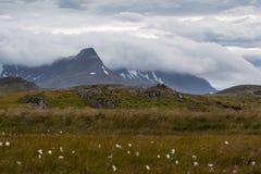 Lynniga icelandic himlar, berg, blommor royaltyfri fotografi