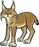 lynx бесплатная иллюстрация