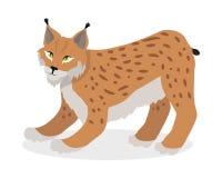 Lynx, Bobcat, Wilde staking op Witte Kattenfamilie die wordt geïsoleerd Stock Afbeelding