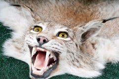 Lynx bourré Images libres de droits