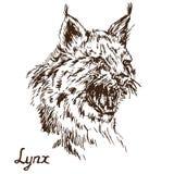 Lynx die bobcat, heeft een verbitterde mond, hoektanden geopend de grommen stock illustratie