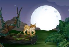 Lynx en bos Royalty-vrije Stock Afbeeldingen