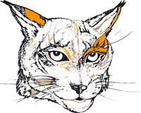 Lynx face Royalty Free Stock Image