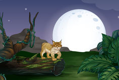 Lynx and forest Royalty Free Stock Images