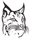 Lynx. Head of lynx, bobcat head Royalty Free Stock Photos