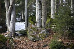 Lynx lying on the rock. Photo was taken in Bavarian Forest National Park Stock Photos