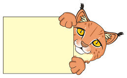 Lynx peek up from clean poster. Snout of orange lynx stick out from beige poster Royalty Free Stock Photography