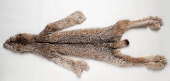 Lynx pelt. Lynx skin on a white background Stock Photo