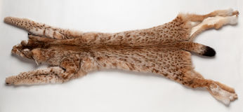 Lynx pelt Stock Photography