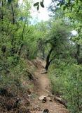 Lynx See, Prescott, Yavapai County, Arizona Lizenzfreie Stockfotos