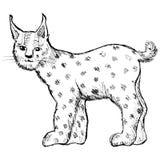 Lynx sur le blanc Photos libres de droits