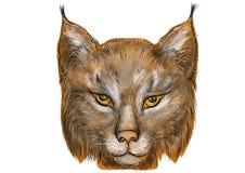 Lynx sur le blanc Photos stock