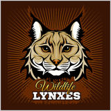 Lynxes - vector emblem. Lynx Wildcat mascot illustration Royalty Free Stock Image