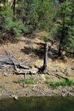 Lynxmeer, Bradshaw-Boswachtersdistrict, Prescott National Forest, Staat van Arizona, Verenigde Staten Royalty-vrije Stock Foto's