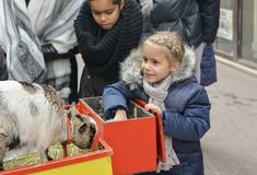 LYON, FRANCE - DECEMBER 11, 2016: Girl feeds young white goat at a fair royalty free stock photo