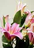 Lys, lily. Bouquet of lily flower with a rose Royalty Free Stock Image