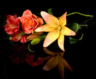 Lys vermelhos Buch do vermelho do fleur da flor, ramalhete Imagens de Stock Royalty Free