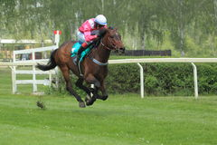 Lysa nad Labem -horse racing Stock Image