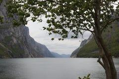 Lysefjorden Immagini Stock Libere da Diritti