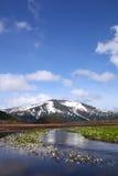 Lysichiton camtschatcense und Mt.Shibutu stockbild
