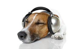 lyssnande musik för hund till royaltyfria bilder