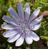 Lyster av lösa blommor arkivfoto