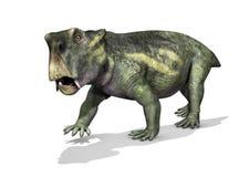 Lystrosaurus dinosaurie Arkivfoto
