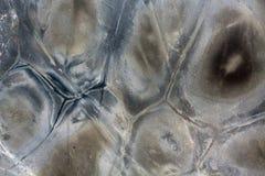 Lyxig kvartsitstentextur, abstrakt bakgrund Royaltyfria Bilder