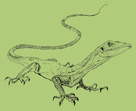 Lézard, dessin peint à la main de contour Photographie stock