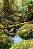 Mágica da floresta húmida imagem de stock royalty free