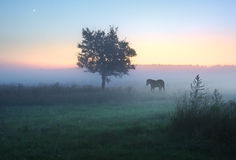 Mágica da manhã nevoenta foto de stock royalty free
