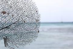 A mágica da vida marinha Imagens de Stock Royalty Free