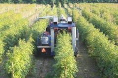 Máquina da colheita da fruta imagens de stock