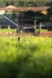 Máquina da irrigação em um berçário de pinheiro Foto de Stock Royalty Free